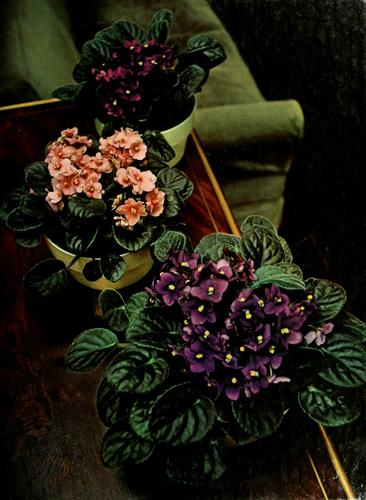 Download Flowering house plants
