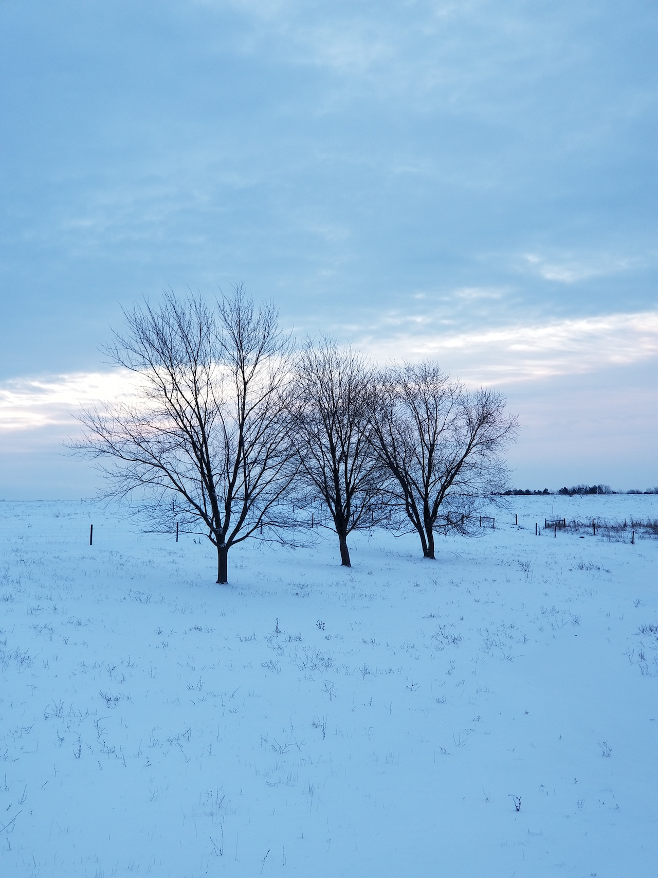 Snow covered field in the FLX (photo)